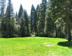 CampAlta-Pines,meadow.JPG