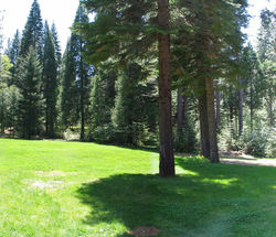 CampAlta-Pines,meadow_2.JPG