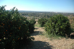 Side_Hill_Citrus_(27).JPG