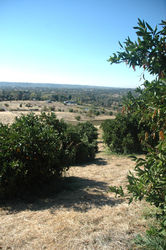Side_Hill_Citrus_(34).JPG