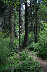 Big_Trees_Grove_(174).jpg