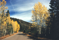 Blackwood_Canyon_in_Autumn-1408-21-01a-300dpi.jpg