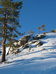 Snowy_Peak_with_trees_300dpi.jpg