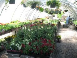 Tahoe_Tree_Nursery_(33).JPG